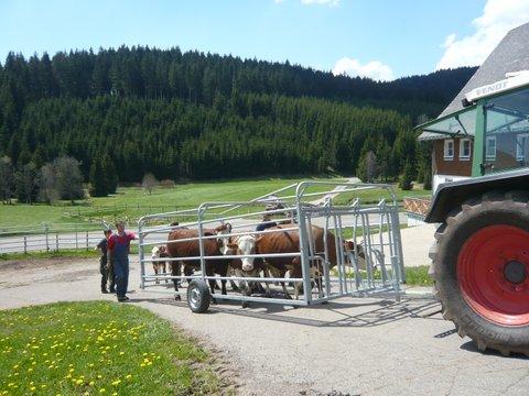 Almauftrieb-Unterhoefenhof-Ferienwohnungen-001