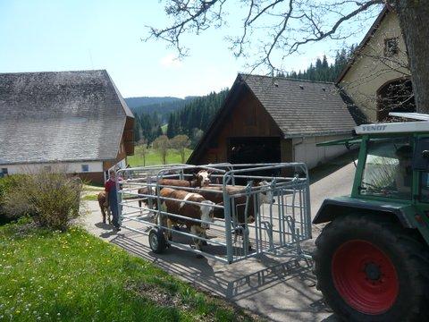 Almauftrieb-Unterhoefenhof-Ferienwohnungen-002