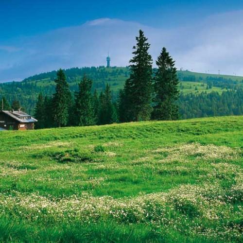 Feldberg im Sommer (Bild: Hochschwarzwald Tourismus Gmbh)