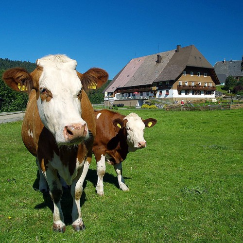 Bauernhoferlebnis für die ganze Familie auf dem Unterhöfenhof - Ferienwohnungen Schwarzwald Titisee Jostal