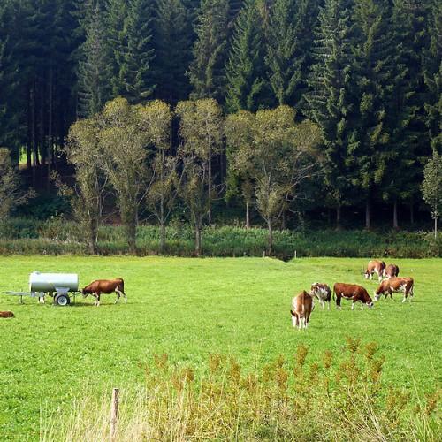 Natürliche Landwirtschaft auf dem Unterhöfenhof - Ferienwohnungen Schwarzwald Titisee Jostal