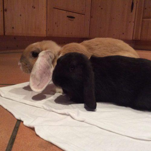Zuwachs Kaninchen Lotta und Paulchen