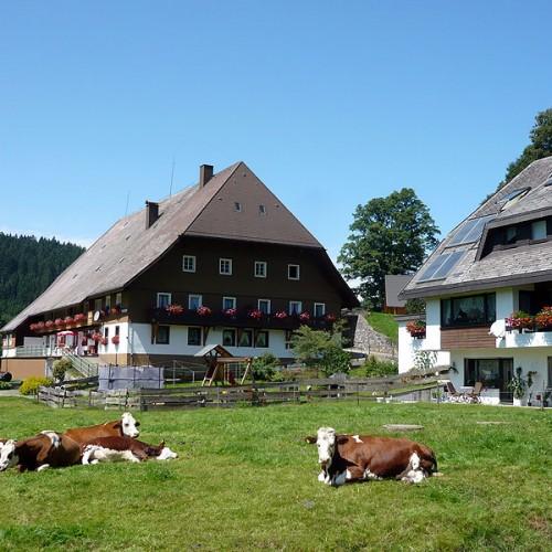 Leben im Einklang mit der Natur auf dem Unterhöfenhof - Ferienwohnungen Schwarzwald Titisee Jostal