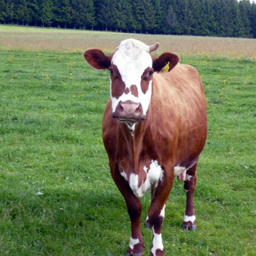 Tiere erleben auf dem Unterhöfenhof - Ferienwohnungen Schwarzwald Titisee Jostal