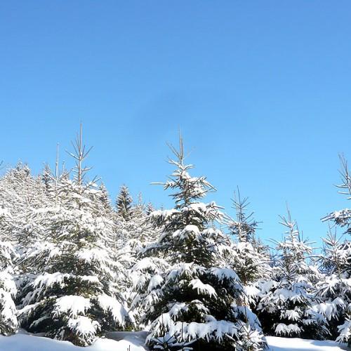 Winter auf dem Unterhöfenhof - Ferienwohnungen Schwarzwald Titisee Jostal