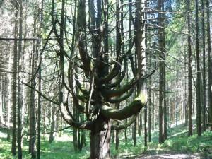 wunderbaum-003-800x600-unterhoefenhof-ferienwohnungen-schwarzwald
